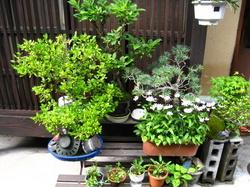 京都の路地の緑