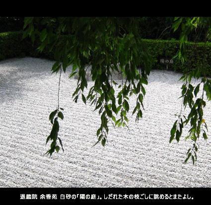 退蔵院 余香苑 白砂の「陽の庭」。しだれた木の枝ごしに眺めるとまたよし。