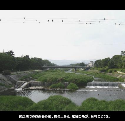 賀茂川でのお茶会の前、橋の上から。電線の鳥が、音符のような。