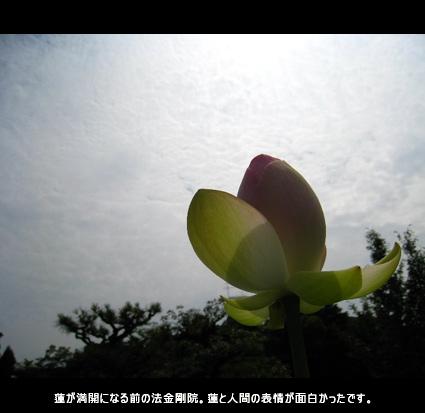 蓮が満開になる前の法金剛院。蓮と人間の表情が面白かったです。
