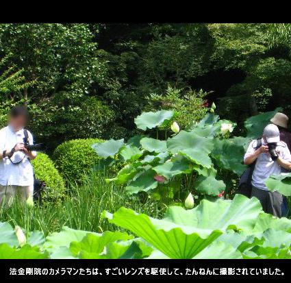 法金剛院のカメラマンたちは、すごいレンズを駆使して、たんねんに撮影されていました。