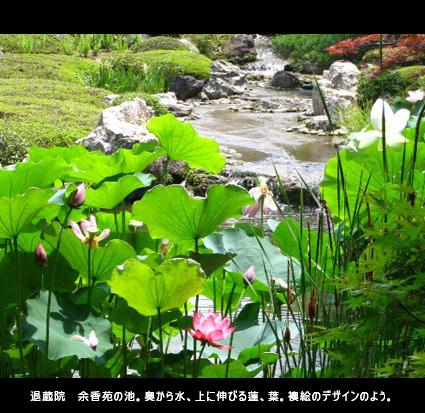 退蔵院の余香苑の池。奥から水、上に伸びる蓮、葉。襖絵のデザインのよう。