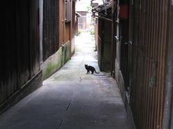祇園あたりの路地の猫