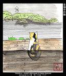 金福寺の猫
