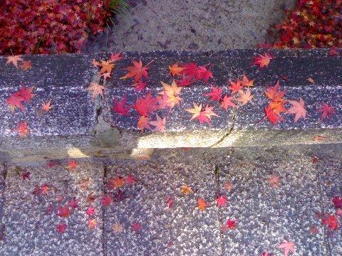 糺ノ森(2006年12月)